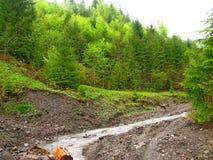 Gebirgsstrom im grünen Wald Lizenzfreies Stockfoto
