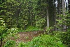 Gebirgsstrom im Wald Lizenzfreie Stockfotos