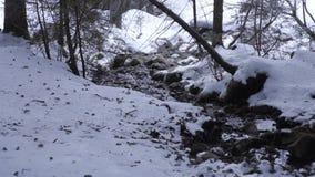 Gebirgsstrom im Wald mit Wasserfall und Schnee stock footage