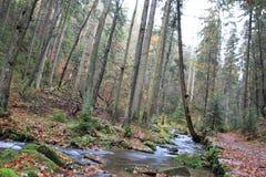 Gebirgsstrom mit großen Flusssteinen unter frischen grünen Bäumen Wasserspiegel macht grüne Reflexionen Das Ende des Sommers Stockbilder
