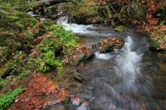 Gebirgsstrom mit großen Flusssteinen unter frischen grünen Bäumen Wasserspiegel macht grüne Reflexionen Das Ende des Sommers Stockbild