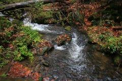 Gebirgsstrom mit großen Flusssteinen unter frischen grünen Bäumen Wasserspiegel macht grüne Reflexionen Das Ende des Sommers Lizenzfreies Stockbild