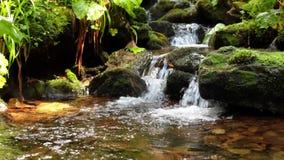 Gebirgsstrom mit Wasserfall stock video footage
