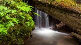 Gebirgsstrom tief im Wald stock video