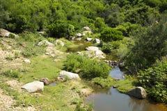 Gebirgsstrom unter Steinen und Bäumen Lizenzfreies Stockbild