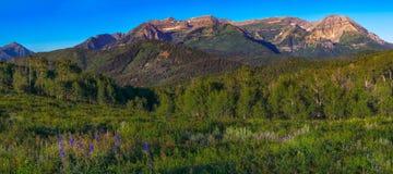 Gebirgsszene nahe Park City Utah im Sommer lizenzfreie stockbilder