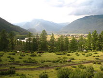 Gebirgstal mit Kiefernwald, Felder des Grases und Pferde, Altai, Russland Lizenzfreies Stockbild