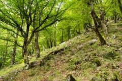 Gebirgsunberührter Wald stockfotografie