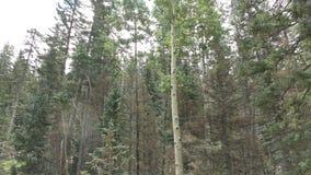 Gebirgswälder in Arizona, Südwesten USA stock footage