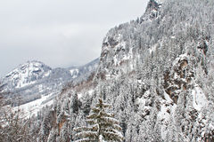 Gebirgswald abgedeckt im Schnee Lizenzfreie Stockfotos