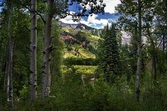 Gebirgswald, Blendungs-Himmel-Tellurid, Colorado Stockfoto