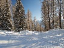Gebirgswald in den Schweizer Alpen Lizenzfreie Stockfotos