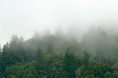 Gebirgswald in den Wolken Stockfotografie