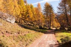 Gebirgswald in der Herbstsaison Stockbild