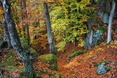 Gebirgswald im Herbst Lizenzfreies Stockfoto