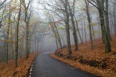 Gebirgswald im Herbst stockfotos