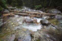 Gebirgswaldfluß mit dem Holz gefallen in ihn Lizenzfreie Stockfotos