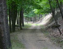 Gebirgswaldpfad oder -spur Lizenzfreies Stockbild