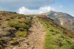 Gebirgsweg durch blühendes Rhododendrontal zu Pip Ivan m lizenzfreies stockfoto