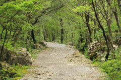Gebirgsweg in Paklenica Lizenzfreies Stockfoto