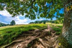Gebirgsweg in Pieniny - Baum wurzelt im Vordergrund stockbilder