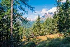 Gebirgswilder Wald in Italien Lizenzfreie Stockfotografie