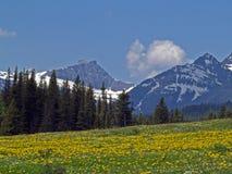 Gebirgswildflower-Wiese Lizenzfreie Stockfotografie
