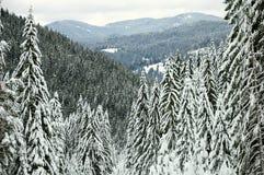 Gebirgswinterwald stockfoto