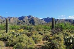 Gebirgszug neben Bärn-Schlucht Arizona lizenzfreies stockfoto