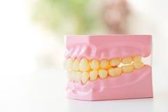 Gebiss zeigt, wie man Zahnbürste, zahnmedizinische Ausrüstung benutzt lizenzfreie stockfotografie