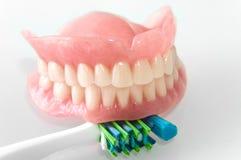 Gebisse mit Zahnbürste Lizenzfreies Stockfoto