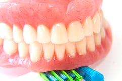 Gebisse mit Zahnbürste stockfotografie