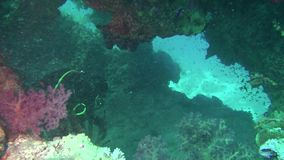 Gebissen in den Kapazitäten Angthong Nationalpark Unerkannter Taucher steigt auf der Oberfläche Wasser Underwater tauchen stock footage
