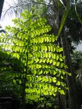 Gebläse-Baum Stockbilder