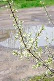 Geblühte Bäume Stockfoto