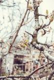 Geblühte Bäume Lizenzfreie Stockfotos