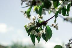 Geblühte Bäume Lizenzfreie Stockfotografie