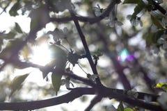 Geblühte Bäume Lizenzfreies Stockbild