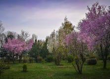 Geblühte Bäume im Vorfrühling stockbilder