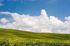 Geblühte Landschaft stockbilder