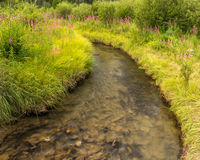 Geblühter Nebenfluss Jasper National Park Stockfotos