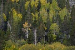 Gebladerte in Lundy-Canion, Hoover-Wildernis, Siërra Nevada Range, Californië Royalty-vrije Stock Foto's