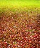 Gebladerte op gras Stock Foto's