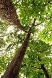 Gebladerte van bomen in de zon Stock Afbeelding