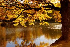 Gebladerte van de de herfst het eiken oever van het meer stock foto