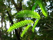 Gebladertedetail, Amazonas-staat Venezuela Stock Foto