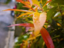 Gebladerteschot van bladeren met regendruppels Royalty-vrije Stock Foto's