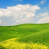 Gebloeid Landschap stock afbeeldingen