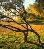 Gebogen Bomen Royalty-vrije Stock Afbeelding