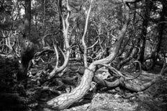 Gebogen bomen Royalty-vrije Stock Foto